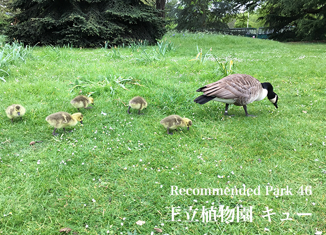 Recommend Park 4 王立植物園キュー